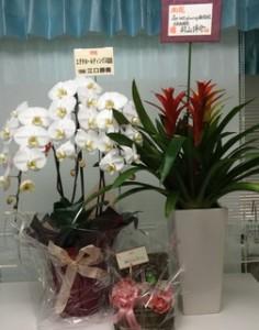 『お祝い花』をありがとうございます!